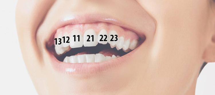 нумерация зубов у человека в стоматологии
