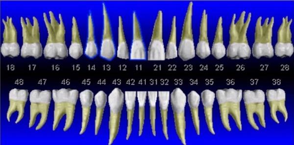 Система нумерации зубов Виола