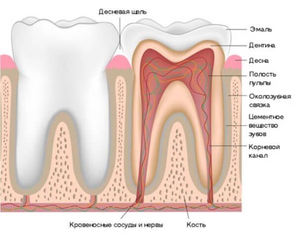 Картинки по запросу каналы зуба