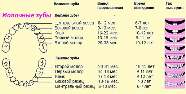 Формула и сроки формирования молочного прикуса