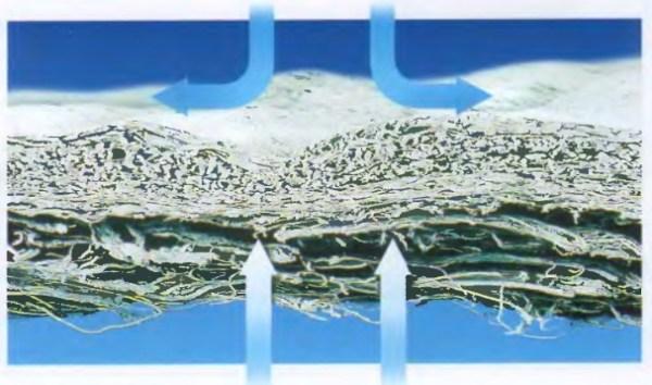 Коллагеновая мембрана в стоматологии